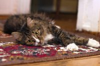 Researchers have found high levels of brominated flame retardants in the blood of house cats exposed to dusts in our homes.